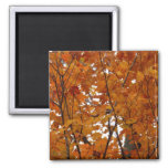 Branches of Maple Leaves I Orange Autumn Magnet