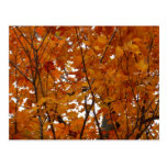Branches of Maple Leaves I Orange Autumn Postcard