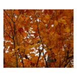 Branches of Maple Leaves I Orange Autumn Poster
