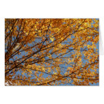 Branches of Maple Leaves II Orange Autumn Card