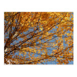 Branches of Maple Leaves II Orange Autumn Postcard