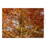 Branches of Orange Leaves Autumn Nature Card