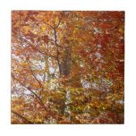 Branches of Orange Leaves Autumn Nature Ceramic Tile