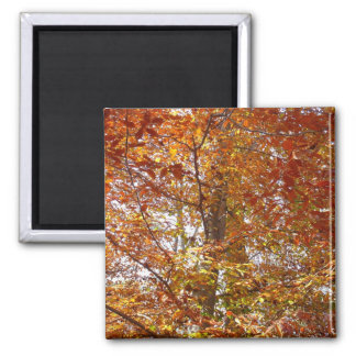 Branches of Orange Leaves Autumn Nature Magnet