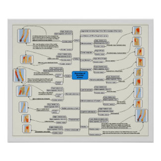 Branches of the Brachial Plexus Nerve System Chart Poster