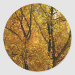 Branches of Yellow Leaves Bright Autumn Colorful Classic Round Sticker