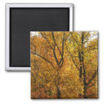 Branches of Yellow Leaves Bright Autumn Colorful Magnet