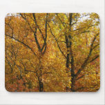 Branches of Yellow Leaves Bright Autumn Colorful Mouse Pad