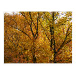 Branches of Yellow Leaves Bright Autumn Colorful Postcard