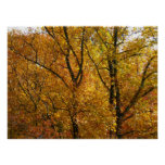 Branches of Yellow Leaves Bright Autumn Colorful Poster