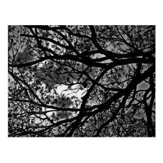 Branches post card