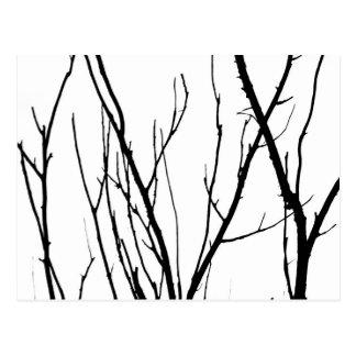 Branches Postcard