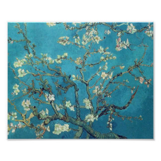 Branches with Almond Blossom  - Van Gogh Poster