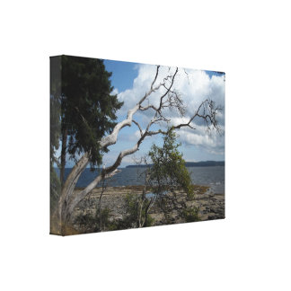 Branching Out Nature Scene Stretched Canvas Print