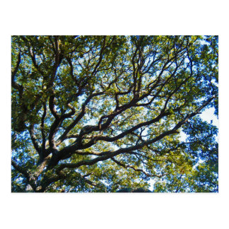 Branching Out Postcard