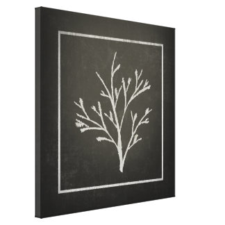 Branching Tree Sapling Chalk Drawing Canvas Print