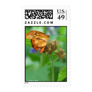 Brand new hatched butterfly baby, orange wings postage stamp