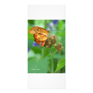 Brand new hatched butterfly baby, orange wings rack card