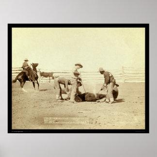 Branding Calves On Roundup SD 1888 Poster