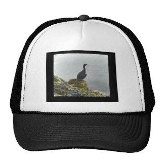 Brandt's Cormorant Hats