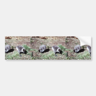 Brant Brood Bumper Sticker