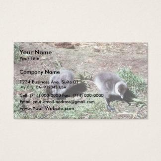 Brant Brood Business Card
