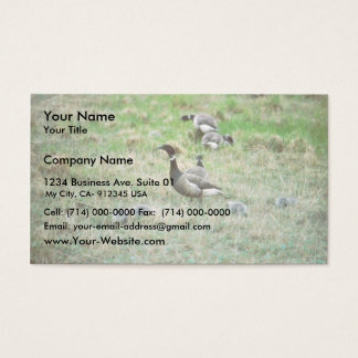 Brant broods business card