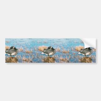 Brant Bumper Sticker