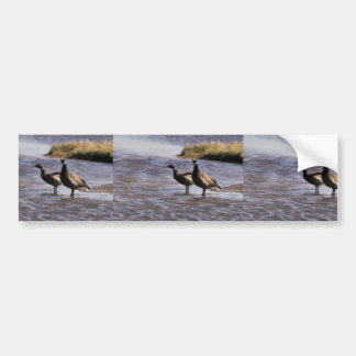 Brant Pair Bumper Sticker