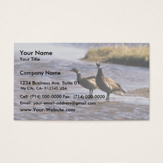 Brant Pair Business Card