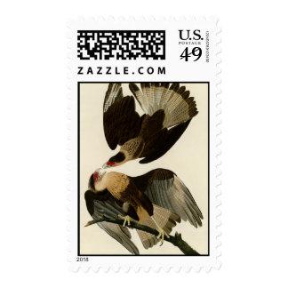 Brasilian Caracara Eagle Postage Stamps