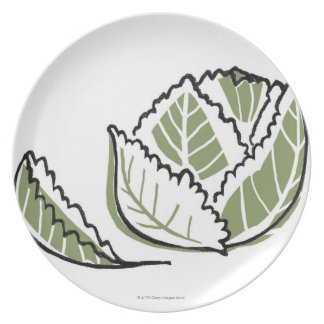 Brassica Oleracea Dinner Plate