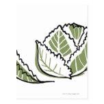 Brassica oleracea tarjetas postales