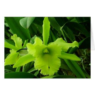Brassocattleya hybrid card