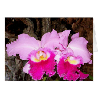 Brassolaelocattleya 'Pamela Finney' Card
