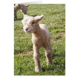 Brave Babydoll Lamb Greeting Card