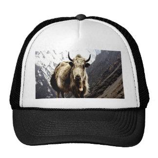 Brave challenger Yak  Bos grunniens Trucker Hat
