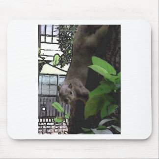 Brave New Squirrel Mouse Pads