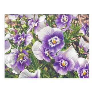 Brave Pansies white purple Color Pencil drawing Postcard