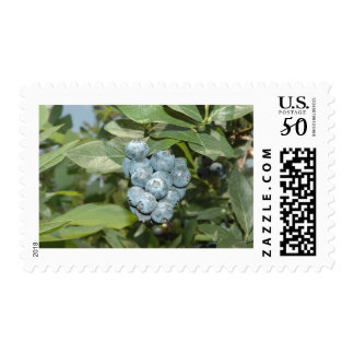 Brays Blueberries Postage