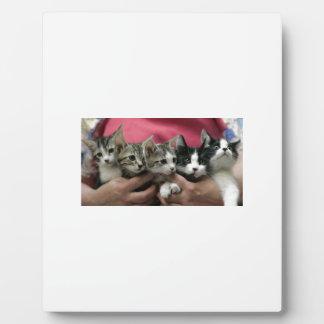 Brazado de gatitos placa de madera