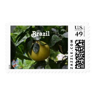 Brazil Grapefruit Stamp