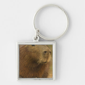 Brazil, Pantanal, Matto Grosso. Capybara Keychain