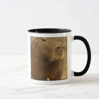 Brazil, Pantanal, Matto Grosso. Capybara Mug