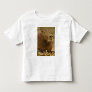 Brazil, Pantanal, Matto Grosso. Capybara T Shirt