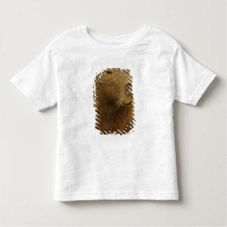 Brazil, Pantanal, Matto Grosso. Capybara Tshirts