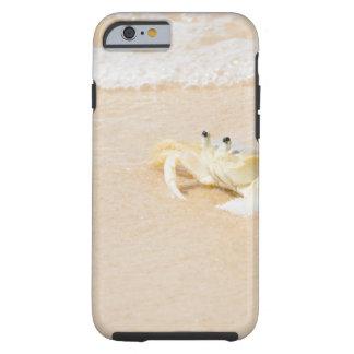 Brazil, Rio de Janeiro, Buzios, Crab on Tough iPhone 6 Case