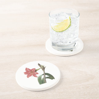 Brazilian amaryllis by Redouté Drink Coaster