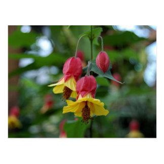 Brazilian Bell-Flower Postcard