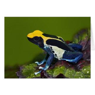 Brazilian Cobalt Dart Frog, Dendrobates Card